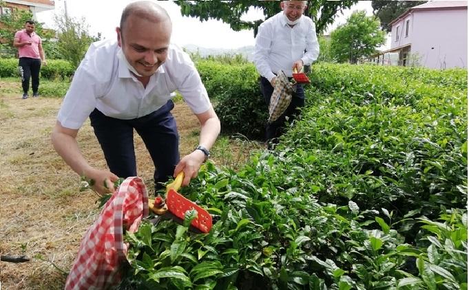 CHP Giresun Milletvekili Tığlı, yaş çay fiyatını iyi buldu, kotayı eleştirdi